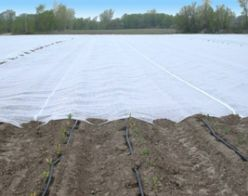 Agryl P-17 - Floating Row Cover