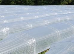 Clear perforated film with Tunnel Flex System