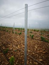 FUERTE Vineyard steel posts